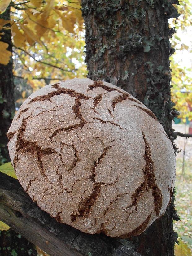 Puolukkainen ruislimppu juureen