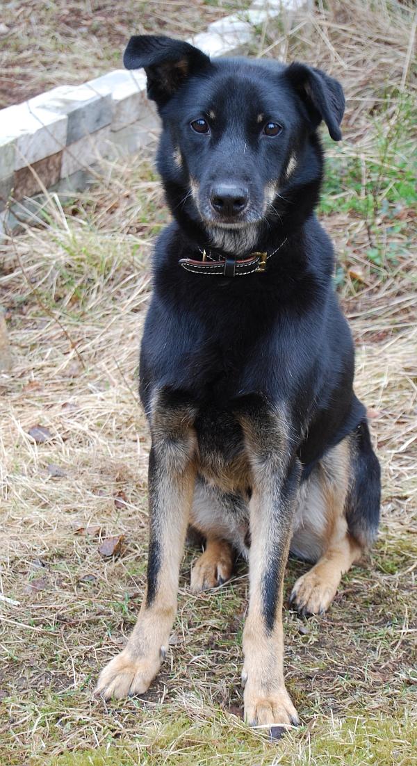 Rescue-koiramme keväisellä pihamaalla.