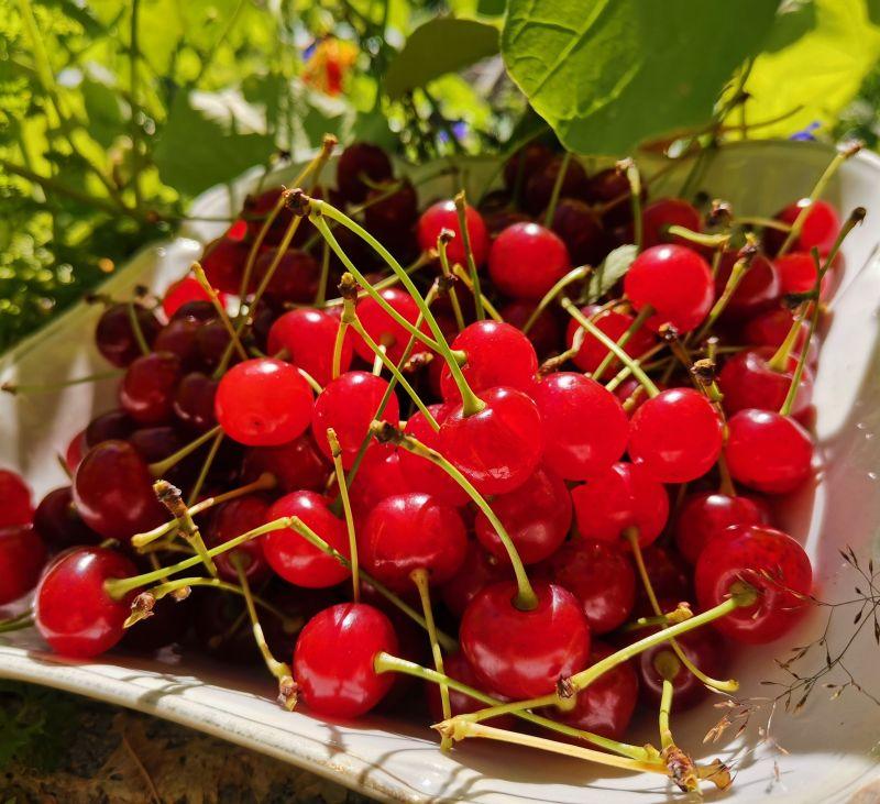 kirsikat sokeriliemessä