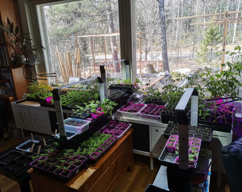 Kasvihuoneen rakentamista ja kasvimaansuunnittelua