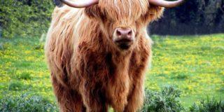highlanderpix